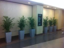 pdi plants blog repetitive use of green indoor plant design in
