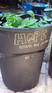 Potato Planter Box by How To Grow Potatoes In A Trash Can Hope Gardens