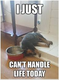 boxer dog jokes best 25 cute dog memes ideas on pinterest smiling dog meme