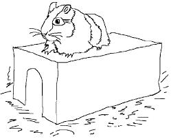 Dessins de hamster à colorier
