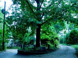 10 most magnificent trees in the world neatorama