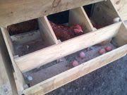 15 chicken nesting box hacks nesting boxes hacks and chicken