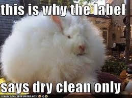 Meme Clean - rabbit ramblings funny bunny monday meme day