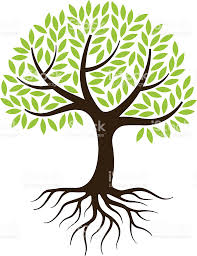 tree illustration with roots stock vector more images