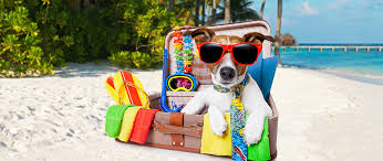 traveling with pets images Traveling with pets dr joi 39 s tips adw diabetes jpg