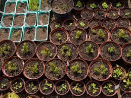 tips for preparing your vegetable garden this summer cbs houston
