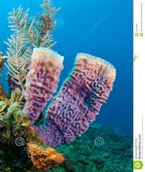 Azure Vase Sponge Facts Azure Vase Sponge фото база