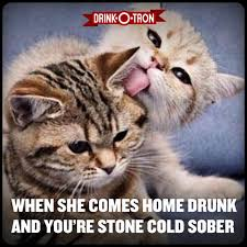 Drunk Cat Meme - drunk memes drink o tron