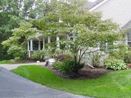 landscape trees and shrubs pictures ideas design ideas u0026 decors