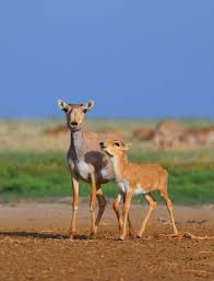 wild antelope to a bird on a bike winners of bmc ecology cosmos