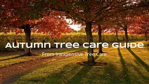 autumn tree care guide