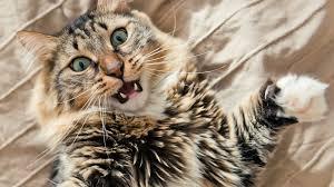 25 cat behaviors that seem random but really aren u0027t