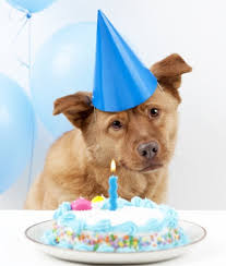 birthday cakes for dogs the ultimate guide to dog birthday cake recipes irresistible pets