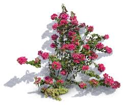 cut out climbing plant with pink blossoms cut out plants vishopper