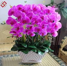 phalaenopsis orchids phalaenopsis seeds potted flowers indoor