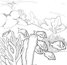 coral reef coloring pages cool coloring pages coloring home