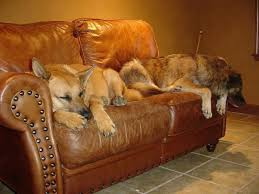 best sofa fabric for dogs best furniture fabric for pets vital decorating advice from our cat