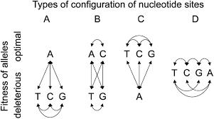 estimating selection on nonsynonymous mutations genetics