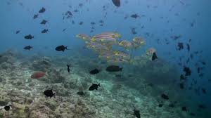 a flock of tropical angry fish on the reef in ocean at
