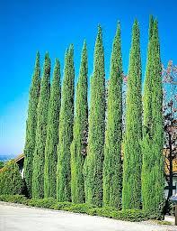 cypress privacy screen cypress the tree interior designer