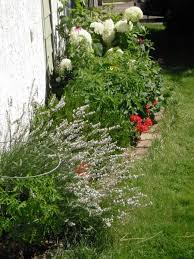 the flowers of summer at 22 best plants for sun with summer flowers dengarden