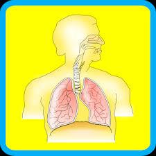 Google Human Anatomy Human Body Anatomy For Kids 2 Android Apps On Google Play