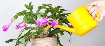 common household plants indestructible houseplants house plants