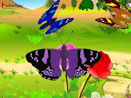 maths symmetry in nature animation english youtube