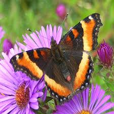 open wing color brown butterflies gardens with wings