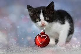 cat christmas free photo kitten grey heart cat christmas free image on