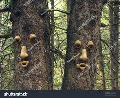 twin trees faces stock photo 7638166 shutterstock