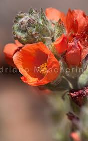 desert flowers u2013 southwest usa parks u2013 minimim universes