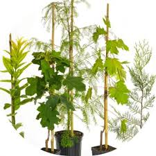 cremation tree the living urn america s leading bio urn planting system