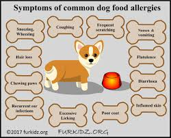 common dog food allergies furkidz