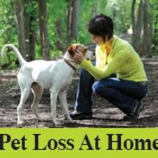 pet euthanasia at home pet loss at home home euthanasia vets 11 photos