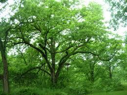 i am a tree hugger my happy place