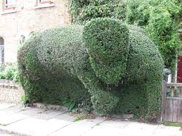 Elephant Topiary Spotted Archives Page 5 Of 5 Art By Caroline Banks