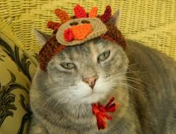 thanksgiving turkey crocheted hat for your cat or small cus