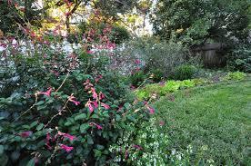 september 2013 dallas garden buzz