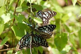 my view all about butterflies legends life habits u0026 more