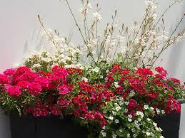 blumen fã r balkon chestha pflanzen idee terrasse