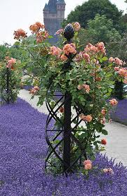 Obelisk Trellis Metal These Metal Garden Trellises Are Beautiful With Or Without Plants