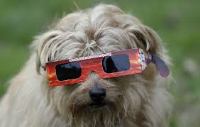Dogs For The Blind Jobs Solar Eclipse And Pets How Will The Solar Eclipse Affect Your Pet