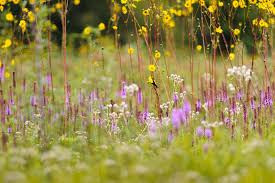 native plants wisconsin arboretum conference offers native gardeners guidance ideas sept 17