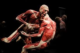 Anatomy The Human Body Body Worlds Exhibition Nyc Discovery Times Square