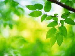 green plants fascinating facts about photosynthesis of non green plants