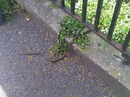 natureplus can anyone identify this snake