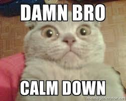 Cat Meme Generator - damn bro calm down geezus cat meme generator humor that i love