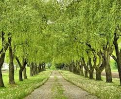 best 25 tree lined driveway ideas on driveways