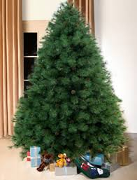 ideas 8 ft tree scottish fir green 8ft